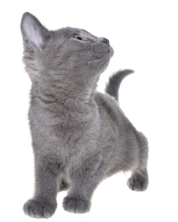 Small kitten playing isolated on a white background 写真素材