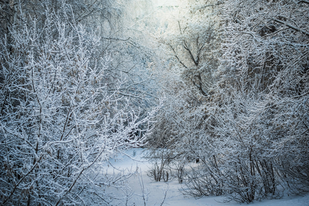 Snow-covered branches of trees on a frosty winter day.