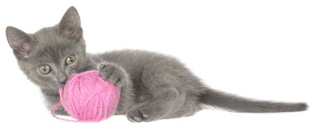 Kitten lay and plays with ball of yarn isolated on white background. 스톡 콘텐츠