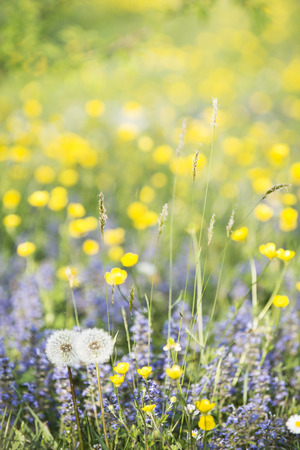 beautiful flowery spring meadow with bright and varied colors on a beautiful sunny day Stock Photo