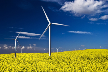 summer landscape with blue sky, yellow expanse with rapeseed flowers and the background wind turbines Stock Photo