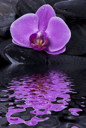 closeup of a beautiful purple orchid flower laid on black stones for wellness massage