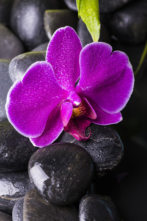 beautiful purple orchid in the foreground on black stones Imagens