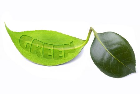 green leaf, conceptual illustration of an ecological nature and sustainable development Imagens