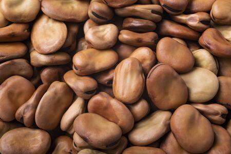 fava beans close up Zdjęcie Seryjne