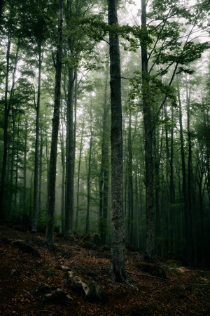 Mysterious dark atmosphere in the forest with fog