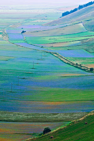 The plain of Castelluccio where are cultivated the lentils at 1400 meters above sea level