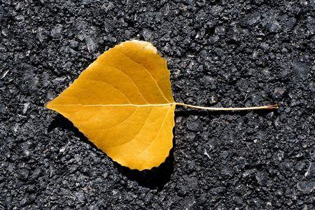 yellow on asphalt