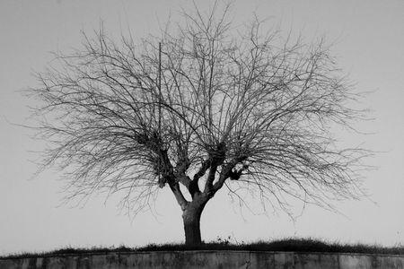 tree bw Stock Photo