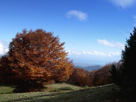 a yellow tree in a mountain landscape autumn
