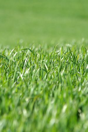 A lawn of green grass Stock Photo