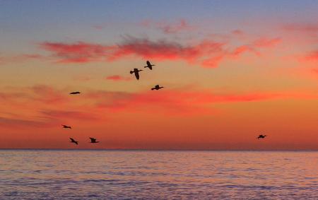 flying at sunrise Banco de Imagens