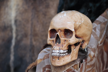 furs: foreground of a skull with furs on background