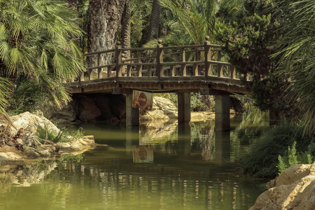 landscape in horizontal view of lake and bridge in El palmeral park on a sunny day in the city of alicante, spain
