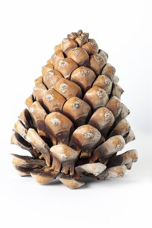 vertical view on foreground of a pinecone isolated on white background