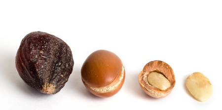argan fruits with shell, without, and broken, with their almond