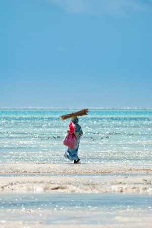 Woman working in Jambiani beach, Zanibar, during the low tide