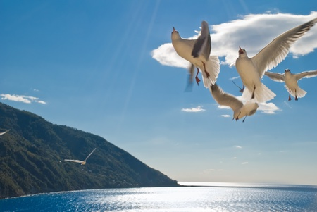 seagulls on flight in a sunny day photo