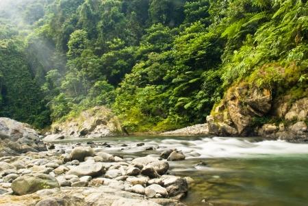 the rising sun in the jungle of Sumatra, Indonesia