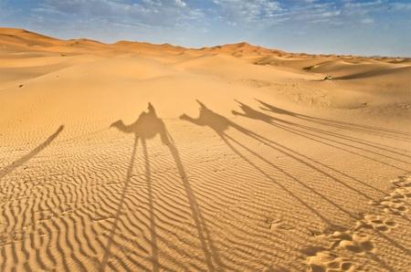 desierto del sahara: Marruecos, las sombras de una caravana de camellos en las dunas