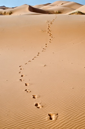 Morocco, Merzouga, footprints on the dunes of the Sahara desert