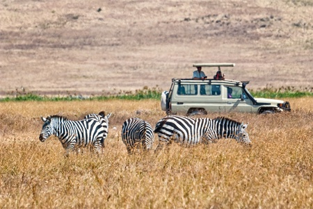 Tourists watch zebra from a 4x4 car during a Safari photo
