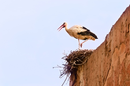 A stork in the nest built on  ancient walls  photo