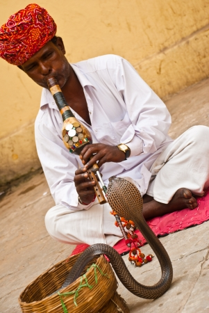 mesmerized: Udaipur, India, August 21, 2008: a cobra mesmerized by a snake charmer. Focus on the hands of the man Editorial
