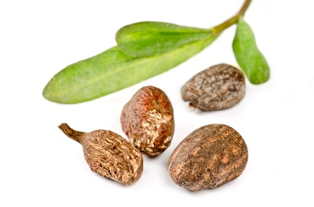 Shea nuts with leaves on white background Stock Photo