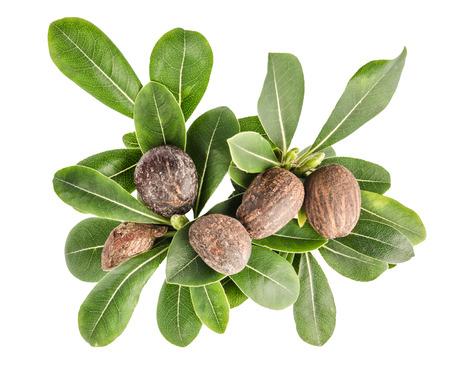 geïsoleerde groep van shea noten met bladeren Stockfoto