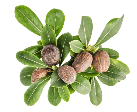 isolated group of shea nuts with leaves