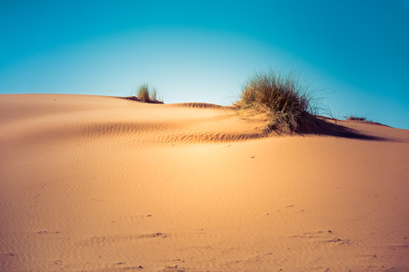 desert footprint: Hot sand dunes in the Sahara desert Morocco
