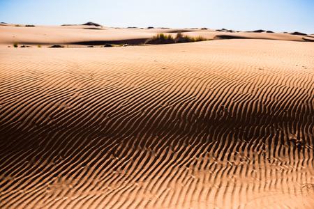 desert footprint: Sahara desert, sand dunes rich of texture Stock Photo
