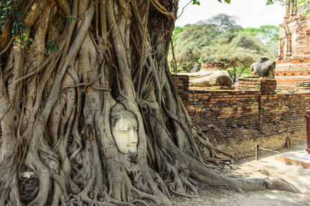 mistery: The head of Buddha in tree roots in Wat Mahatat, Ayutthaya