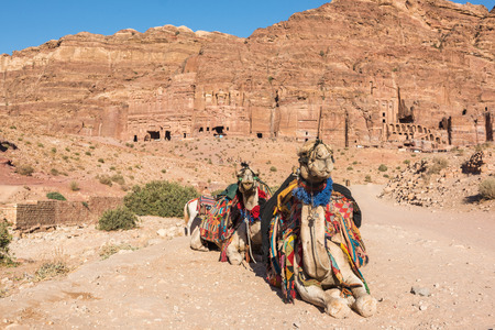 nabatean: Camels on the Colonnade Street, in front of the Royal Tombs, Petra, Jordan