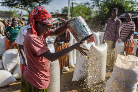 TURMI, ETHIOPIA - AUGUST 20,2015: unidentified woman throws in the air cereals to divide grains from scraps