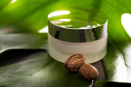 Shea Butter nuts with a jar of cream on a green leaf Stock Photo