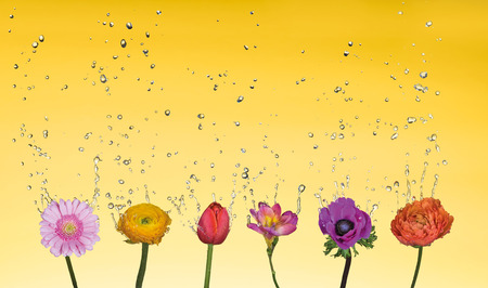 Water splash over mixed flowers on yellow gradiend background