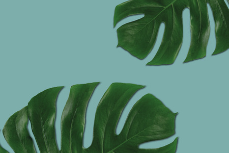 Tropical leaves on a solid color background