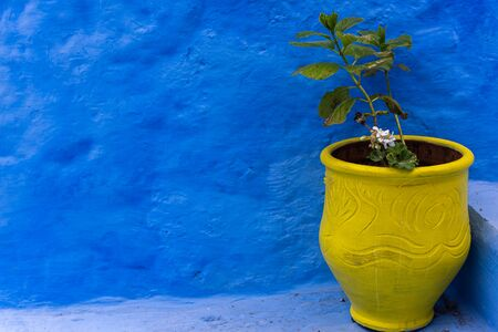 yellow vase against a blue wall
