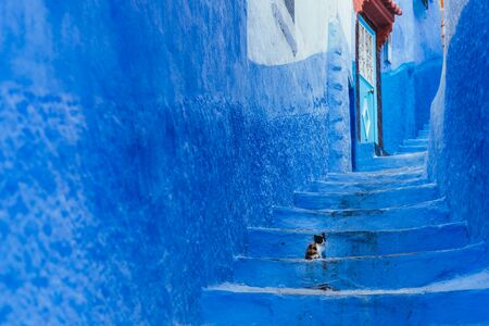 cub cat on a staircase in Chefchaouen Stock Photo