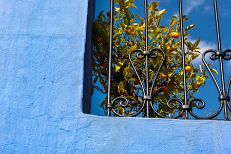 A kumquat tree peep out of a terrace. Colorfull wall with dominant blue hues