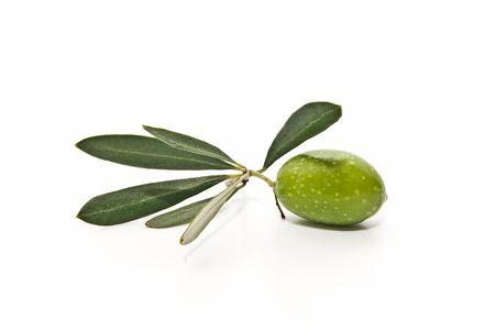 hojas: fresh olive