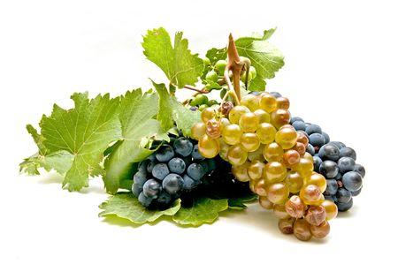 black and white grapes freshly harvested