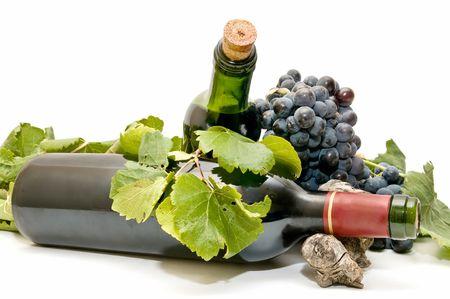 wine bottles lying in leaves