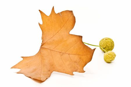 natural sciences: autumn leaves