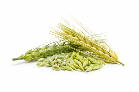 oats: wheat and barley