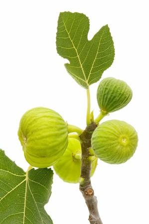 feuille de vigne: figues