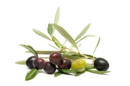 foglie ulivo: olive fresche  Archivio Fotografico