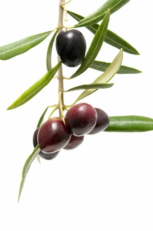 olives in the tree Stock Photo - 8105338